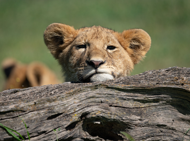 AroundSWSerengeti_01-30-2019_59