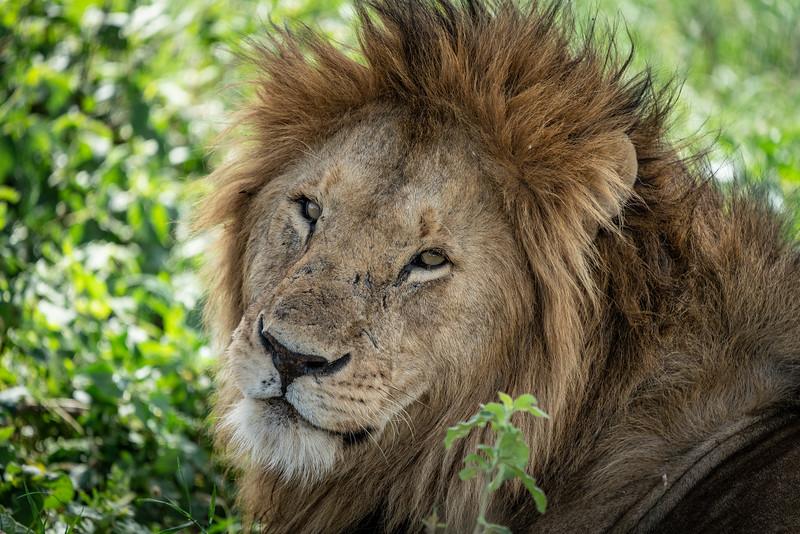 Serengeti_01-28-2019_157