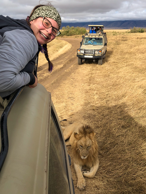 Lion laying in the shade of a safari truck