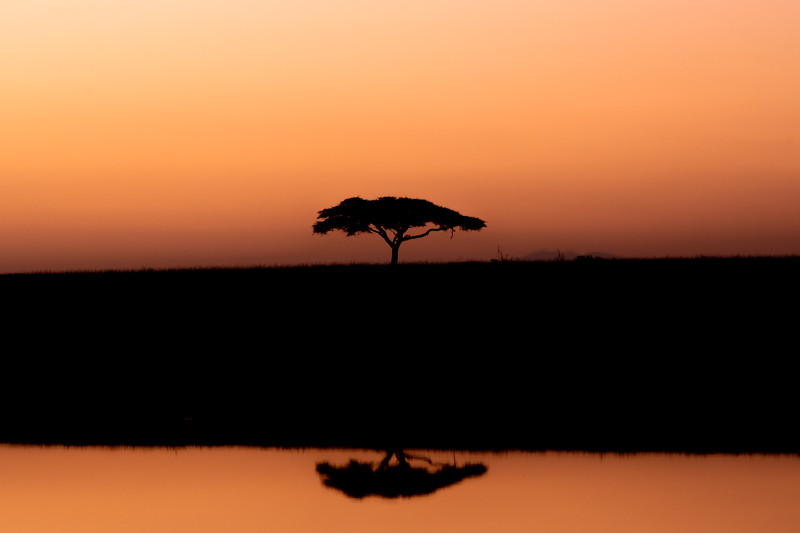 Acacia Tree Early Morning Reflection