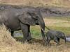 Elephant with baby, Tarangire NP