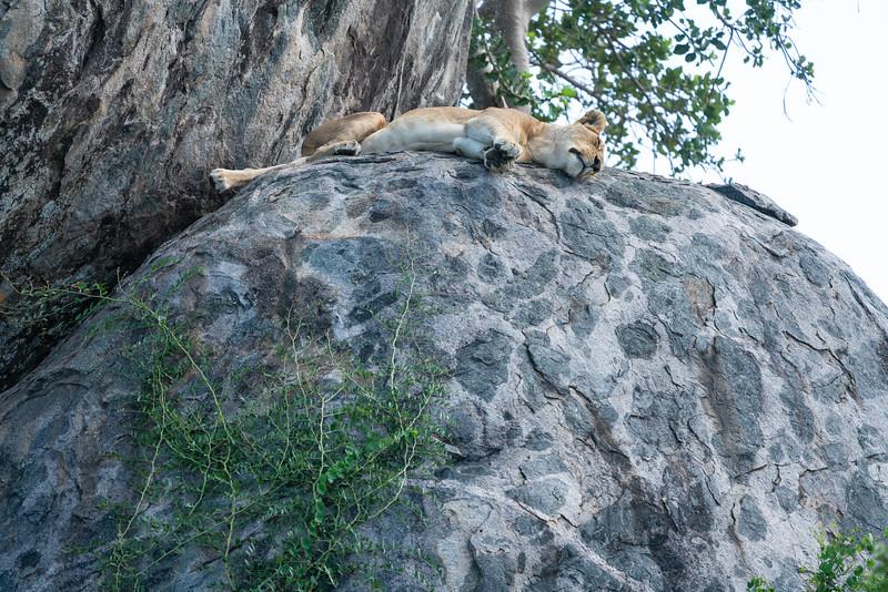 Serengeti_01-27-2019_19