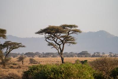 The Serengeti at sunrise