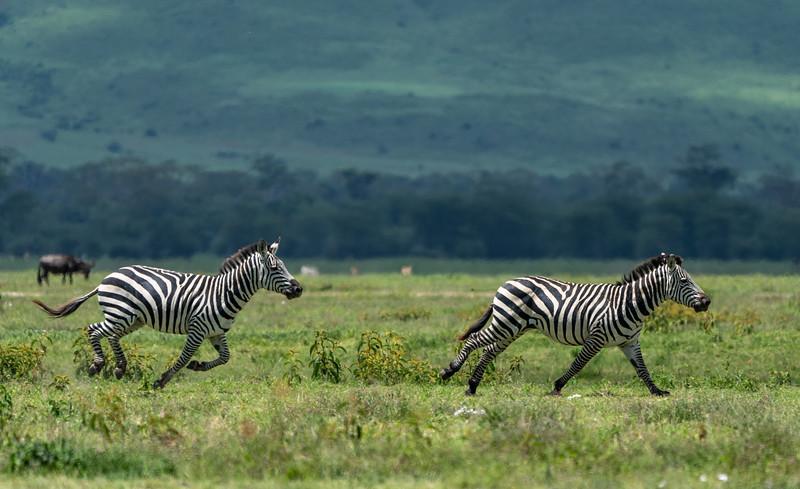 Ngorongoro_01-26-2019_287