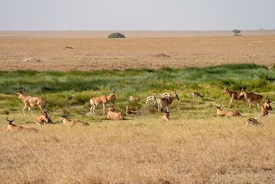 Antelope in Serengeti National Park