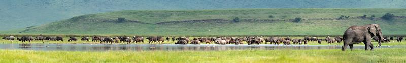 Ngorongoro_01-26-2019_117-Pano