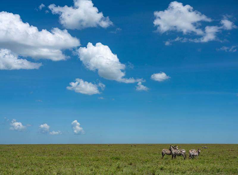 Serengeti_01-26-2019_5