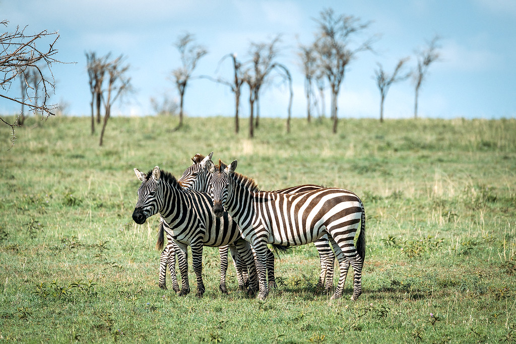 Tanzania Photography Guide
