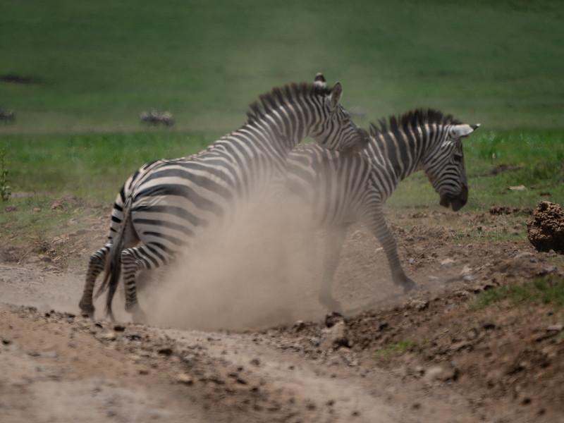 Ngorongoro_01-26-2019_253