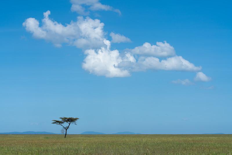 Serengeti_01-27-2019_14