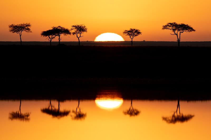 Acacia Tree Reflections