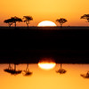 Acacia Tree Reflections