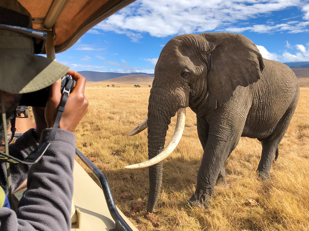 Elephant encounter in the Ngorongoro Crater