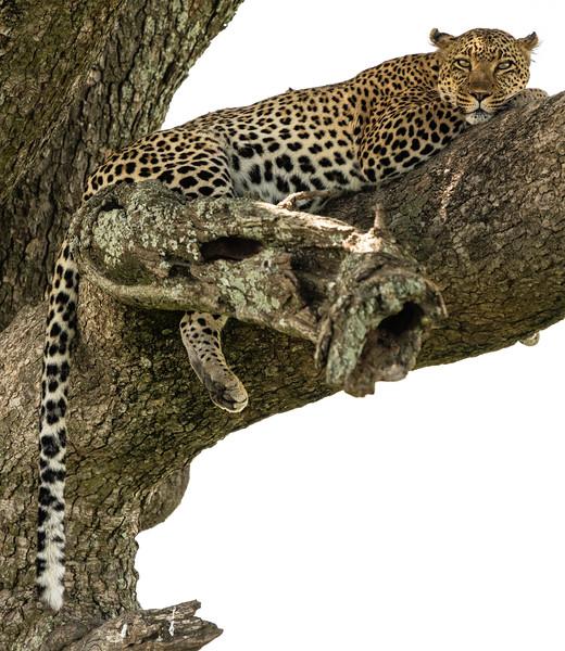Serengeti_01-28-2019_64