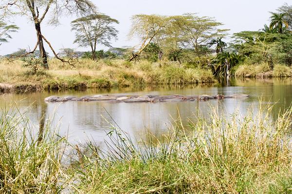 Serengeti #2