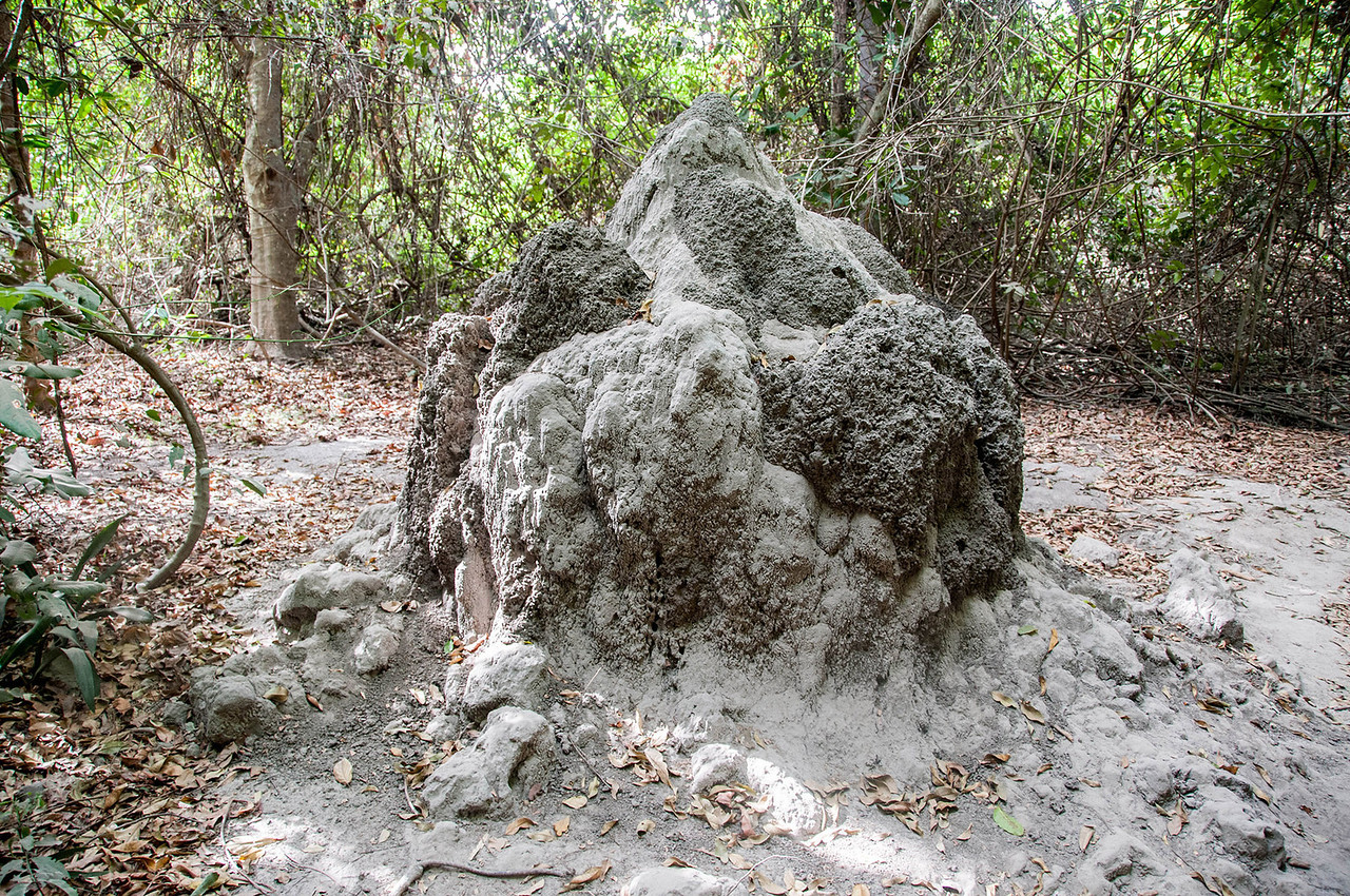 Termite mound in Abuko Nature Reserve, The Gambia