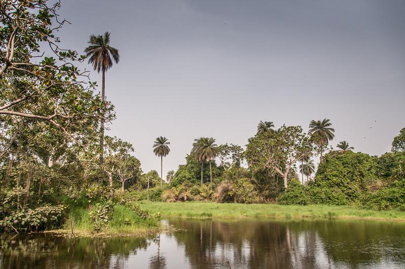 Makasutu Cultural Forest in Banjul, Gambia