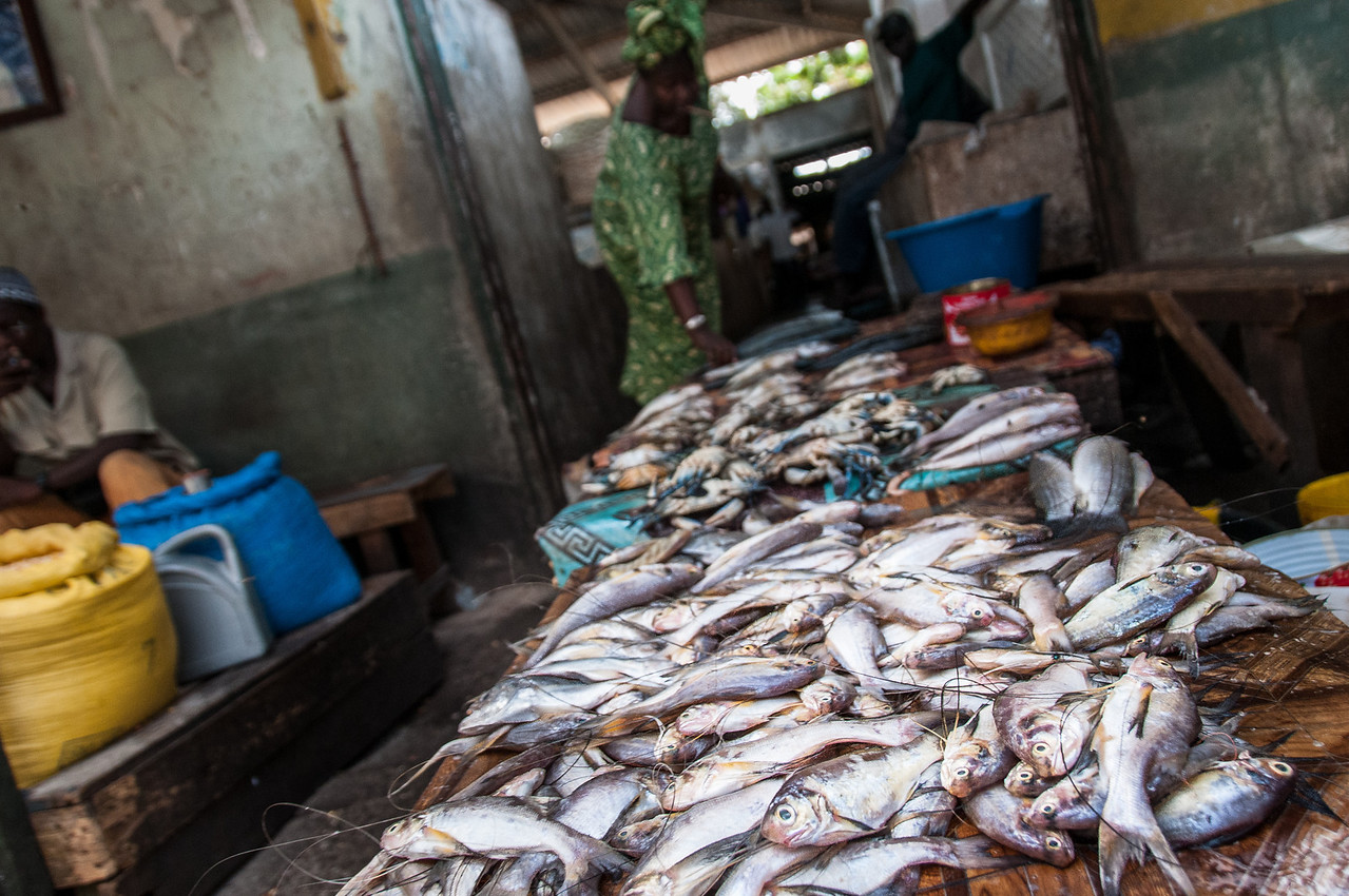 Fish for sale at a market in Banjul, Gambia