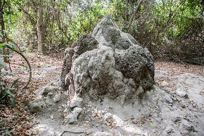 Termite mound in Banjul, Gambia
