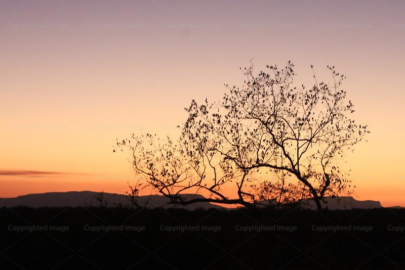 CRay-Trees-1429