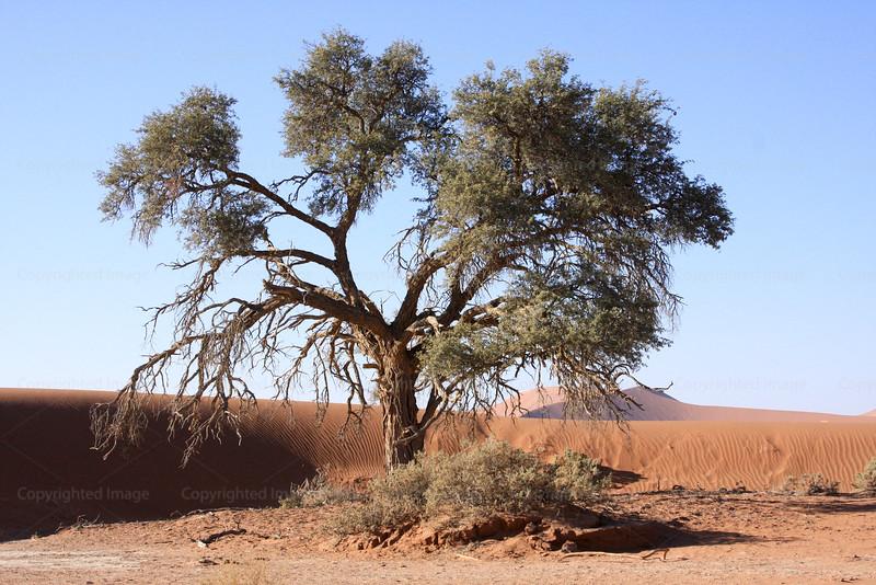 CRay-Trees-0892