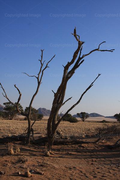 CRay-Trees-0746