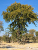 CRay-Africa16-2004