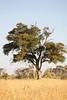 CRay-Africa16-8470
