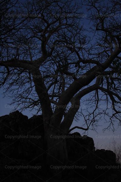 CRay-Trees-0419