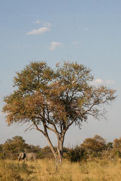 CRay-Africa16-8473