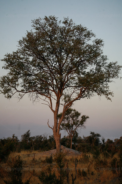 CRay-Africa16-8491-2