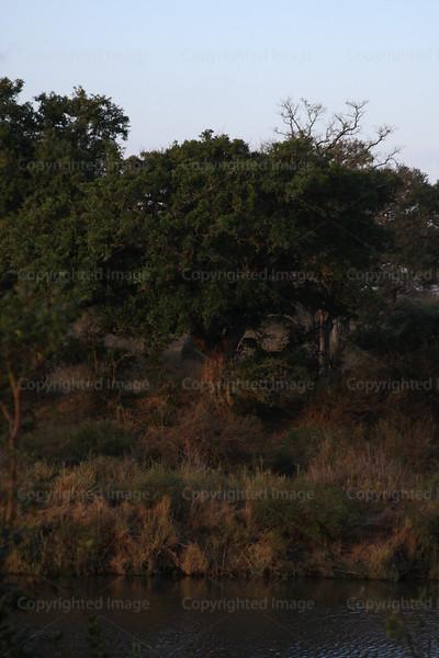 CRay-Trees-1326