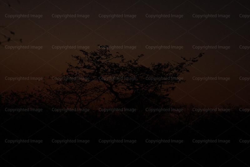 CRay-Trees-0449