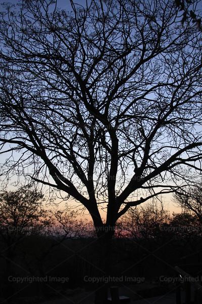 CRay-Trees-0418