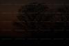 CRay-Trees-0450