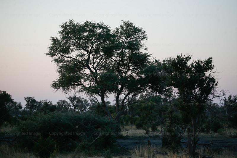 CRay-Africa16-8492-2