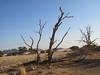 CRay-Trees-2-6
