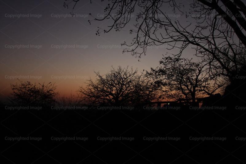 CRay-Trees-0417