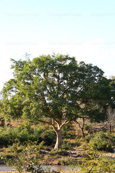 CRay-Trees-2-4