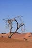 CRay-Trees-0890