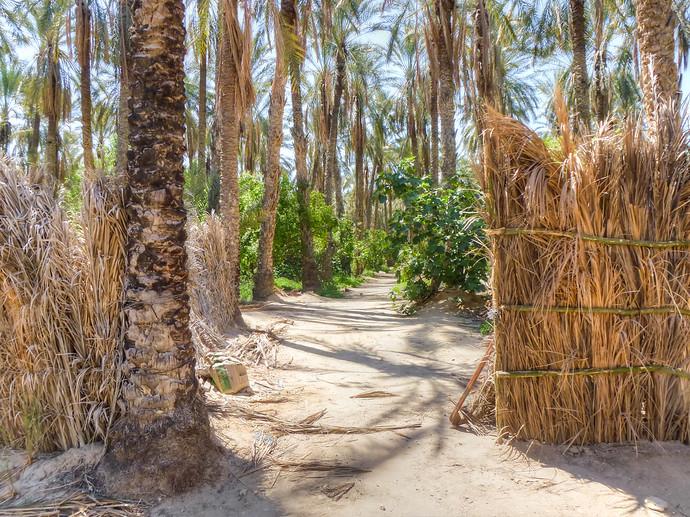 tozeur oasis