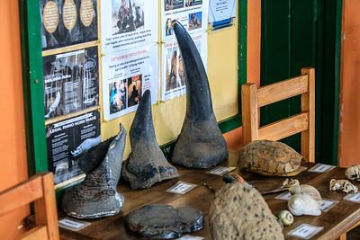 Rhino-Hörner im Ziwa Rhino Sanctuary, Uganda