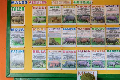 Die Rinos des Ziwa Rhino Sanctuary, Uganda