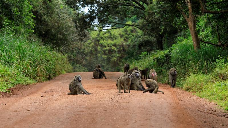 32 Budongo Forest