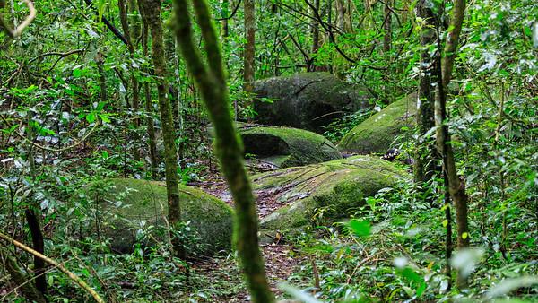 Budongo Regenwald
