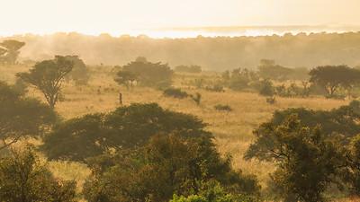 Morgendunst im  Murchison Falls NP