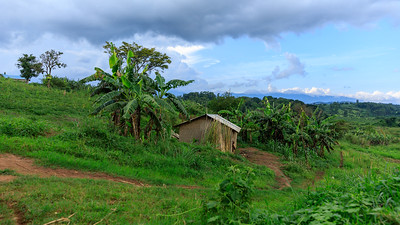 Bergland bei Kubahango mit Blick auf das Ruwenzori-Gebirge, Uganda