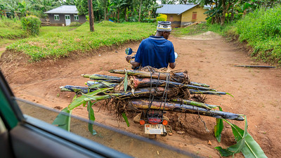 Bananenstämme auf dem Motorrad, Kubahango, Uganda