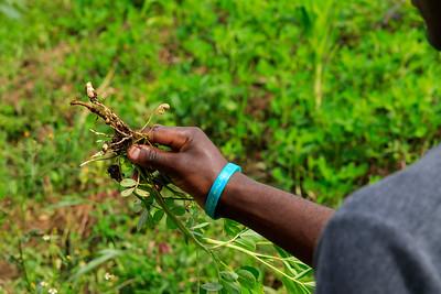 Landwirtschaft in Kichwemba, (QENP), Uganda