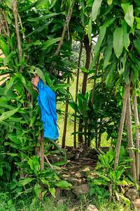 Badezimmer aus Pflanzen, Kichwemba, Uganda